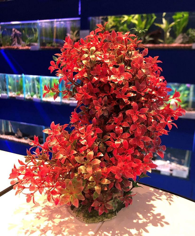 Bendy Colourful Bushy Aquarium Plant Cherry Pink